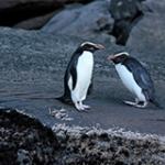 Milford Sound Wildlife