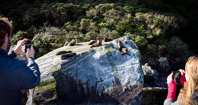 Fur Seals on Seal Rock
