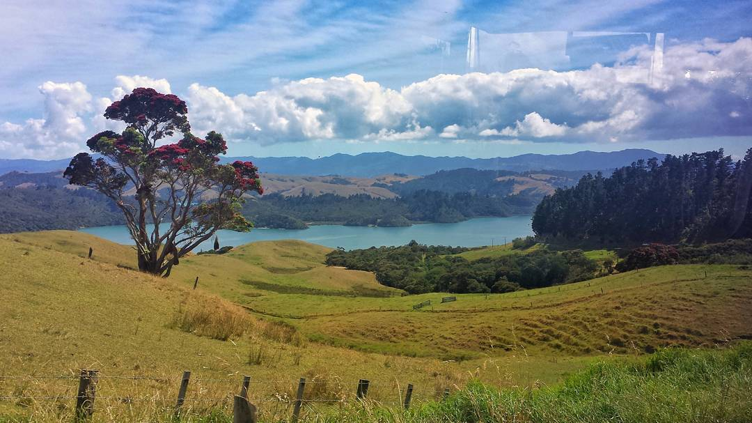 View from an InterCity bus as you travel around New Zealand